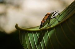 Insecte sur le congé Photo libre de droits