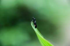 Insecte sur le dessus d'une feuille photo stock