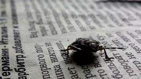 Insecte sur le papier Photo stock