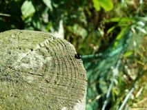 Insecte sur le rondin Photographie stock
