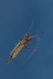 Insecte sur le verre de fenêtre contre le ciel bleu Photo libre de droits