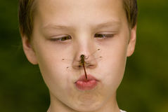 Insecte sur le visage photo stock