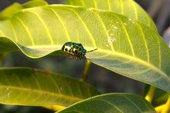 Insecte sur les lames vertes Images stock