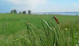 Insecte sur les oreilles images libres de droits