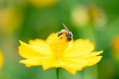 Insecte sur une belle fleur Images libres de droits