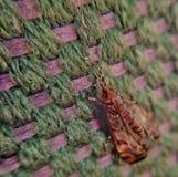 Insecte sur une couverture photographie stock libre de droits