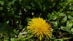 Insecte sur une fleur image libre de droits