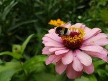 Insecte sur une fleur Images libres de droits