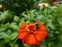 Insecte sur une fleur Photographie stock libre de droits