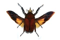Insecte tropical image stock