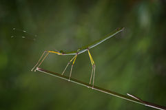 Insecte unique Photo libre de droits