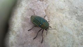 Insecte vert peu commun sur une roche Photos libres de droits