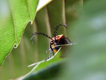 Insecten Royalty-vrije Stock Fotografie