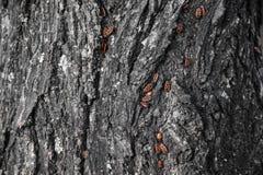 insecten Stock Afbeeldingen