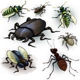 insecten Stock Afbeelding
