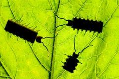 Insecten Royalty-vrije Stock Foto's