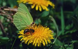 insecten Stock Foto