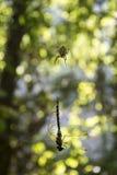insecten De spin en de libel stock foto's