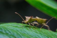 Insecten die helpen bloemen bestuiven royalty-vrije stock afbeeldingen