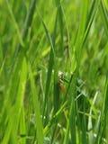 Insecten en andere species Stock Afbeeldingen