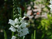 Insecten en andere species Royalty-vrije Stock Afbeelding