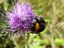 Insecten en andere species Stock Foto's