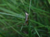 Insecten en andere species Royalty-vrije Stock Afbeeldingen