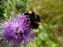 Insecten en andere species Stock Afbeelding