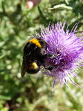 Insecten en andere species Stock Foto
