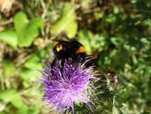 Insecten en andere species Royalty-vrije Stock Foto