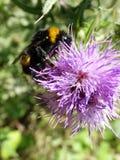 Insecten en andere species Royalty-vrije Stock Foto's