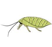 Insecten met zijn antenne stock illustratie