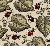 Insecten. Mooie achtergrond van bladeren. Stock Foto's