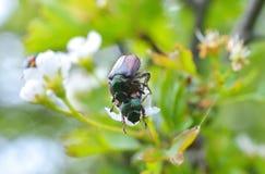 Insecten op blad Stock Fotografie
