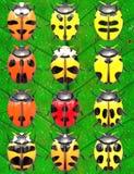 Insecten op bladeren Stock Afbeeldingen