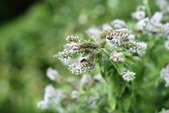 Insecten op Bloem Royalty-vrije Stock Foto