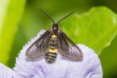 Insecten op bloemen royalty-vrije stock afbeelding