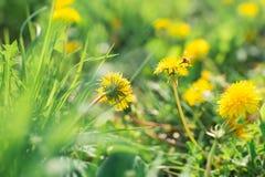 Insecten op een bloem stock foto's