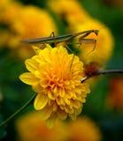 Insecten op een bloem royalty-vrije stock afbeelding