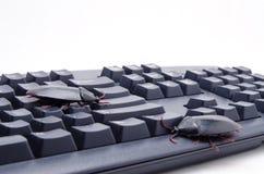 Insecten op een Computertoetsenbord Stock Foto's
