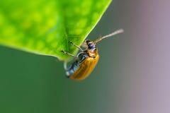Insecten op een groen blad in de lente Stock Fotografie