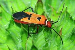 Insecten op een heldere sinaasappel Stock Fotografie