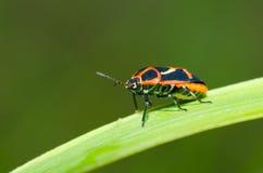 Insecten op het gras royalty-vrije stock afbeeldingen