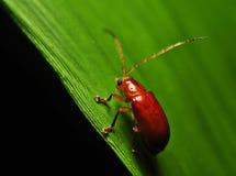 Insecten op Macro Stock Afbeeldingen