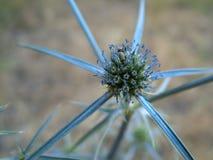Insecten op Prikkeling Royalty-vrije Stock Foto