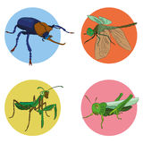 Insecten in vector Stock Foto