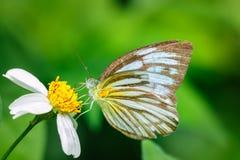 Insecten, vlinder, motten, insect Royalty-vrije Stock Foto