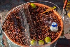 Insecten voor lunch royalty-vrije stock fotografie