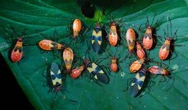 Insectenpartij Stock Afbeeldingen