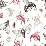 Insectenpatroon Stock Afbeelding